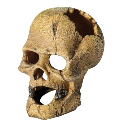 Human Skull with Hole