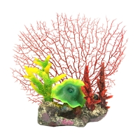 Copi Coral Combined Fan Coral 24.5x20x26cm