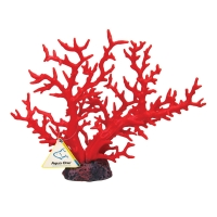 Ornament Copi Coral Red Gorgonian 36x15x30cm