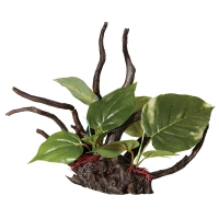 Ornament Driftwood W/anubias Medium 36x34.5x33.5cm