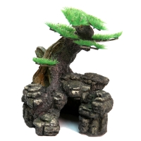 Planter Bonsai On Rocks