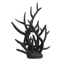 Ornament Black Coral Staghorn (L) 27x24x31cm